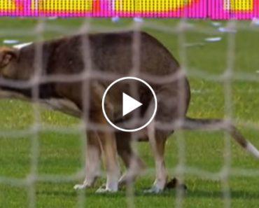 Cão Invade Estádio Para Fazer Necessidades!!! 1