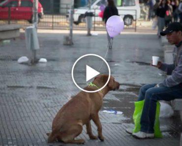 O Dia Em Que Alguém Aproximou Os Cães Abandonados Das Pessoas Que Passam Por Eles Na Rua 5