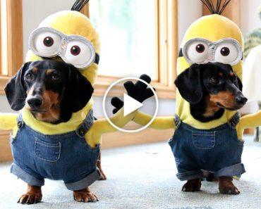 A Melhor Versão Canina Dos Minions 3
