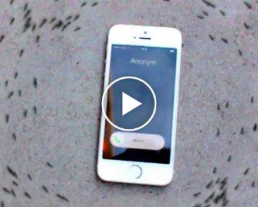 iPhone Faz Formigas Andarem Em Círculo Em Vídeo Que Está a Tornar-se Viral 6
