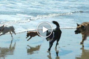 Estes Cães Conseguem Animar o Dia De Qualquer Pessoa 6