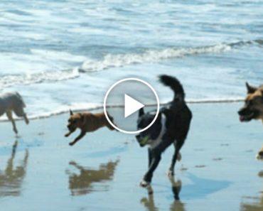 Estes Cães Conseguem Animar o Dia De Qualquer Pessoa 4