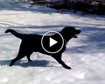 Este Labrador Sabe Como Se Divertir Num Dia De Neve 9