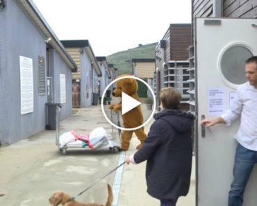 Este é Provavelmente o Vídeo Mais Poderoso Sobre Os Animais Que São Deixados Nos Canis 3