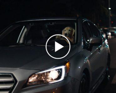 Cães Testam e Aprovam o Novo Modelo Subaru 7