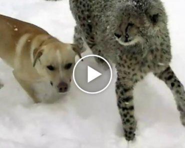 Cão e Chita Vivem Grande Momento De Felicidade Ao Experimentarem Neve Pela 1ª Vez 7