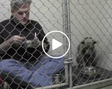 Incrível Veterinário Come Dentro De Canil Com Pitbull Negligenciada Para a Incentivar a Comer 4