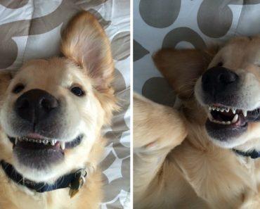 Cão Usa Aparelho Nos Dentes Por Não Conseguir Fechar a Boca e Faz Furor Na Internet 7