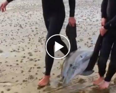 Surfistas Fazem Extraordinário Resgate De Família De Golfinhos Que Ficou Encalhada Na Praia 9