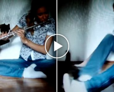 Este Gato Não Gosta De Música 1