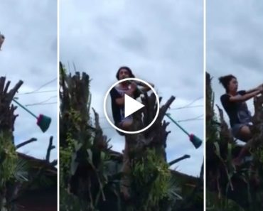 Cantava Bruno Mars No Topo De Uma Árvore Quando Apanhou Choque Eletrico 4