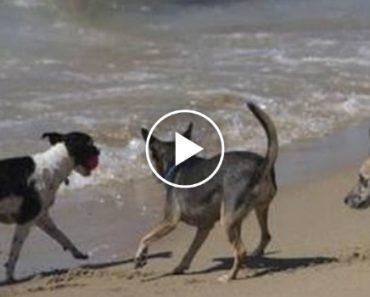 Barcelona Inaugura Primeira Praia Para Cães 2