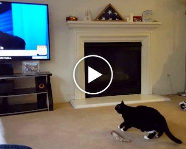 Gato Assusta-se e Foge Sempre Que Vê Donald Trump Na Televisão 1