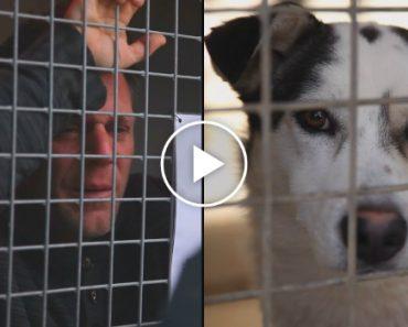 Rémi Gaillard Fica 87 Horas Fechado Num Canil e Angaria 200,000 € Para Doar a Abrigo De Animais 9