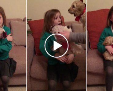 A Adorável Reação De Uma Menina Ao Receber o Tão Desejado Cãozinho Como Presente 6