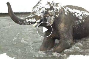 Enorme Quantidade De Neve Fecha Zoo, e Quem Fez a Festa Foram Os Animais 10