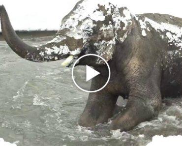 Enorme Quantidade De Neve Fecha Zoo, e Quem Fez a Festa Foram Os Animais 1