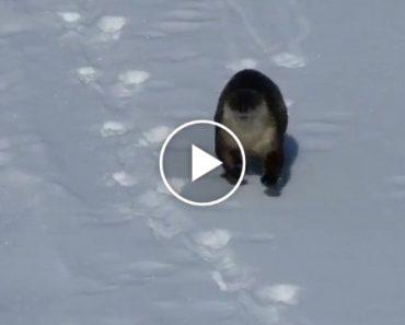 Lontra Brincalhona Surpreende Visitantes De Parque Natural 5