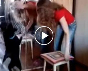 """Prestável Cão Adora """"Ajudar"""" a Dona a Limpar Os Espelhos Da Casa 20"""