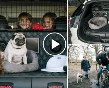 Nissan Lança Carro a Pensar No Transporte De Cães 8