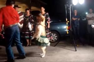 Um Cão a Dançar Merengue?? 9