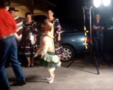 Um Cão a Dançar Merengue?? 2