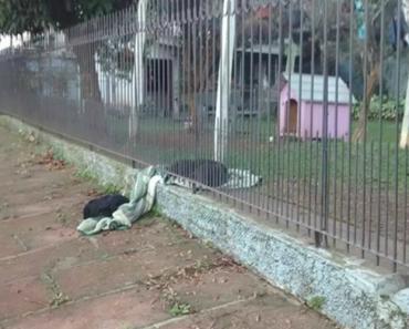 Cadela Resgatada Divide Cobertor Com Um Cão De Rua Numa Noite Fria 5