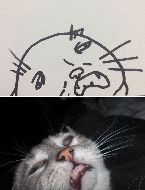 Desenhos De Gatos Que Não Acreditaria Que Existiam Se Não Houvessem Fotos 3