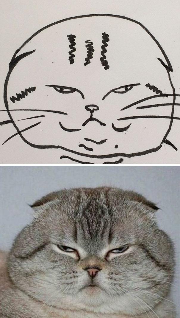 Desenhos De Gatos Que Não Acreditaria Que Existiam Se Não Houvessem Fotos 9