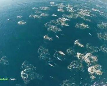 Drone Sobre o Oceano Capta Momento Simplesmente Maravilhoso 7