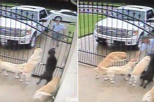 Carteiro Pára Em Frente a Uma Casa Não Para Deixar Cartas, Mas Para Cumprimentar Os Cães 9