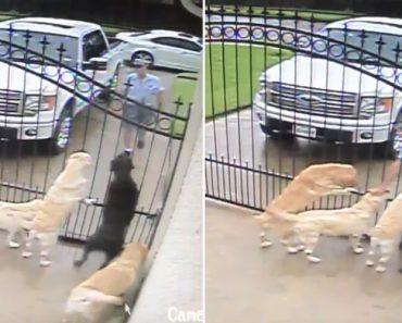 Carteiro Pára Em Frente a Uma Casa Não Para Deixar Cartas, Mas Para Cumprimentar Os Cães 4