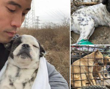 Homem Arrisca a Vida Para Salvar Mil Animais Do Festival De Carne De Cão Na China 6