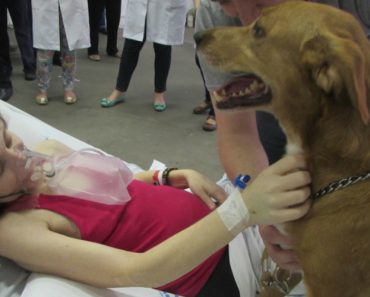 Paciente Com Doença Terminal Realiza o Seu Último Desejo: Ver o Seu Cão Pela Última Vez 9