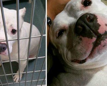 15 Fotos 'Antes e Depois' Mostram Como a Adoção Transformou Estes Cães Abandonados 1