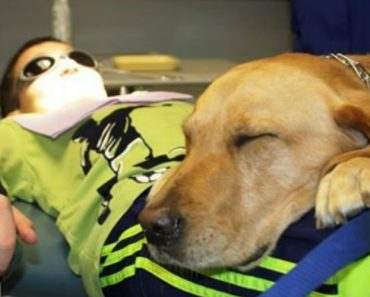 Dentista Leva o Seu Cão Para o Consultório Para Que As Crianças Se Sintam Mais Calmas 3