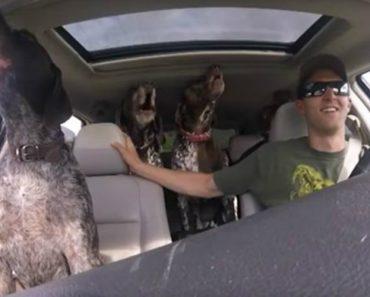 Cães Ficam Completamente Loucos Ao Perceberem Para Onde o Dono Os Está a Levar 1