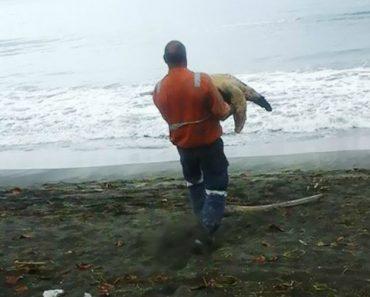 Homem Compra Tartarugas No Mercado Alimentar e Volta a Libertá-Las No Mar 9