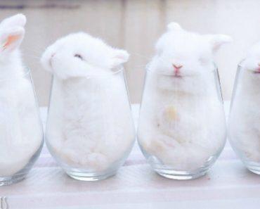 4 Coelhinhos Adoráveis Usam Confortáveis Copos De Vidro Para Dormir 2