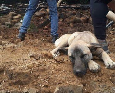 Jacinto, o Cão Que Espera Pelo Dono Que Faleceu No Terramoto No México 1
