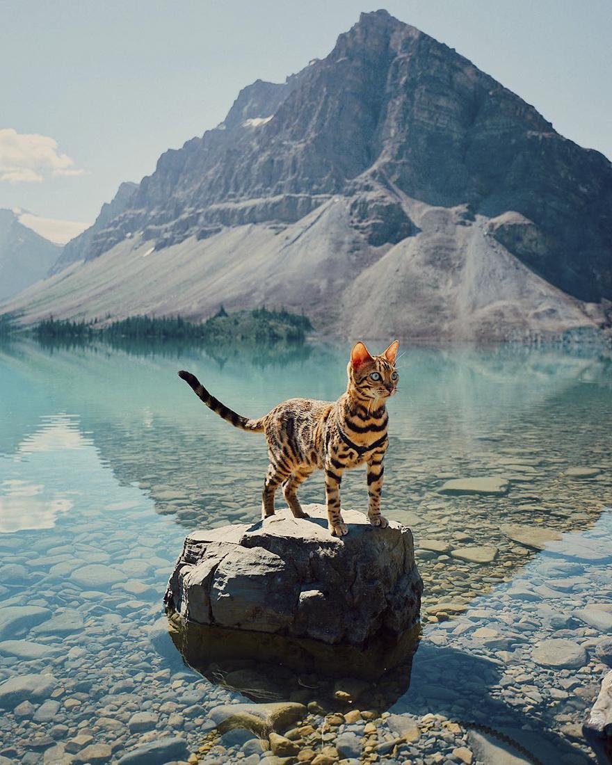 Conheça Suki... a Gatinha Que Adora Viajar Pela Montanha! 1