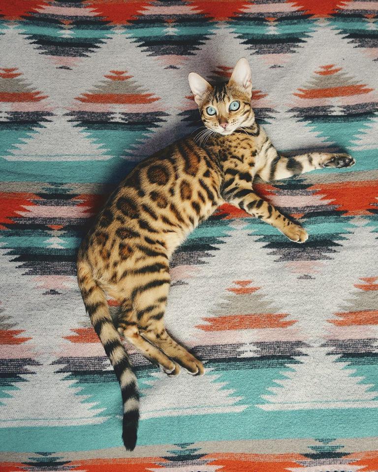 Conheça Suki... a Gatinha Que Adora Viajar Pela Montanha! 14