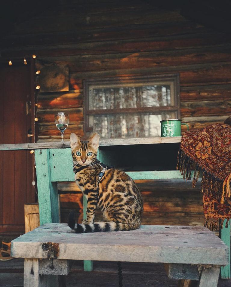Conheça Suki... a Gatinha Que Adora Viajar Pela Montanha! 17