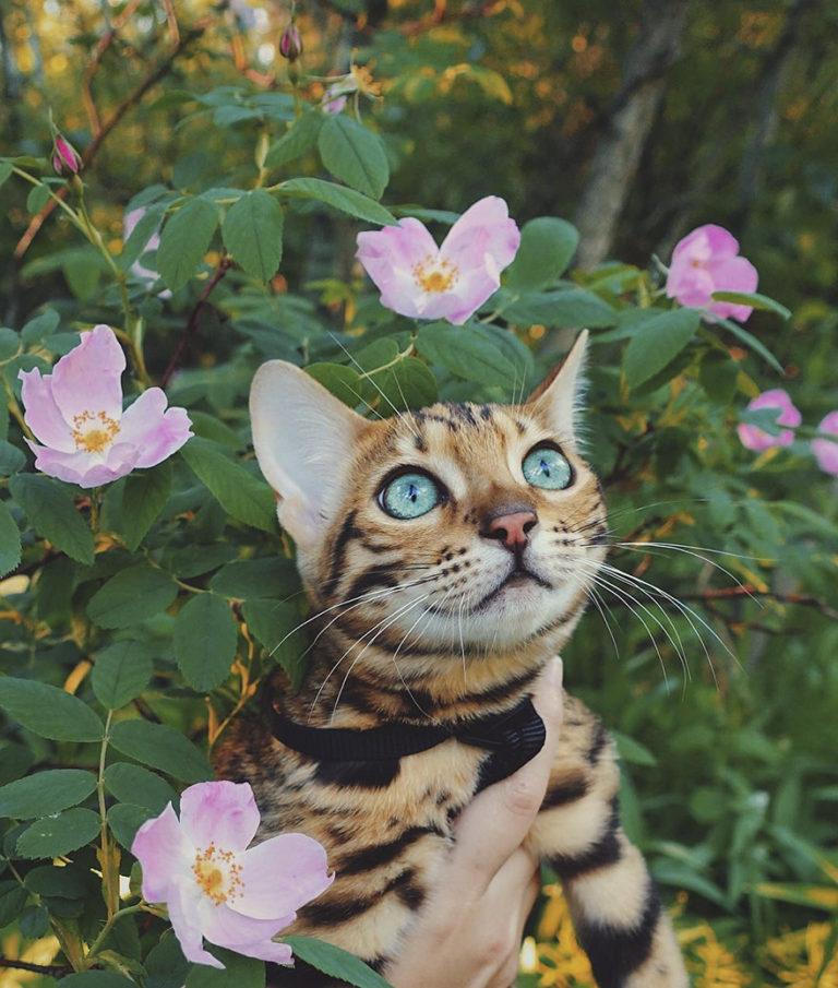 Conheça Suki... a Gatinha Que Adora Viajar Pela Montanha! 20