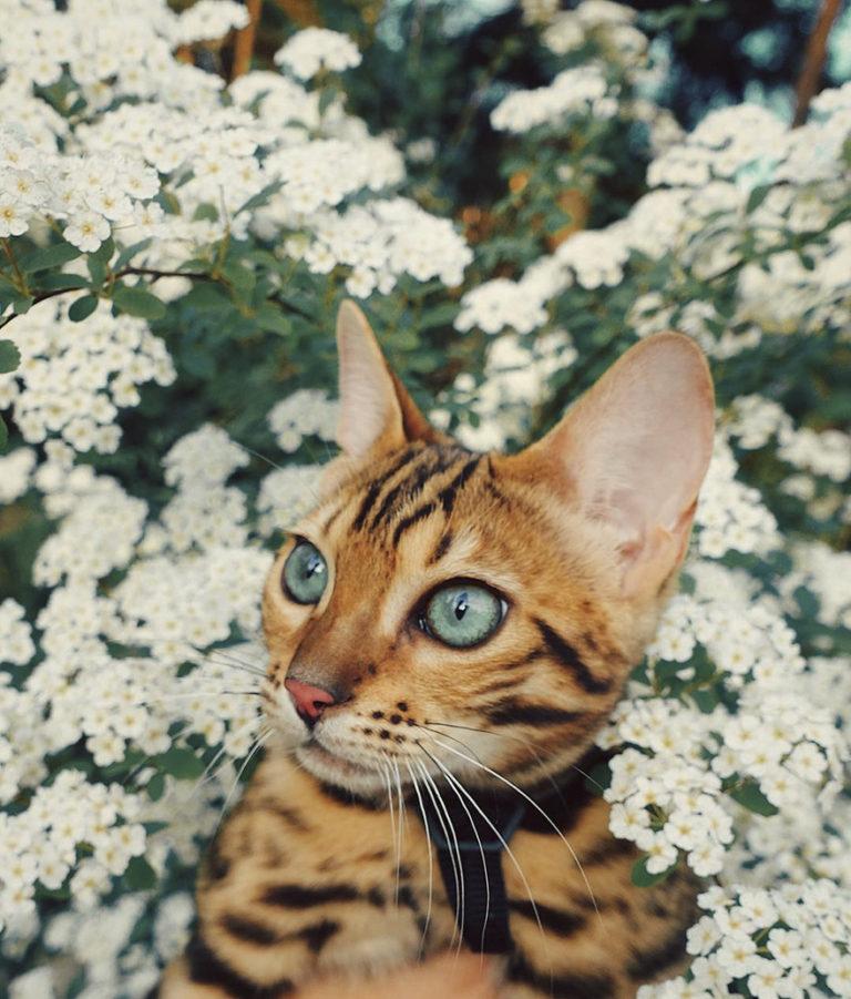 Conheça Suki... a Gatinha Que Adora Viajar Pela Montanha! 22