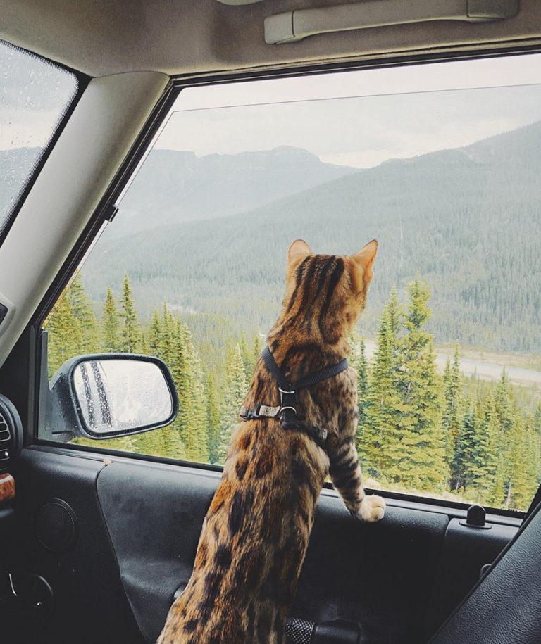 Conheça Suki... a Gatinha Que Adora Viajar Pela Montanha! 23