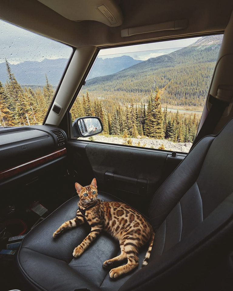 Conheça Suki... a Gatinha Que Adora Viajar Pela Montanha! 25