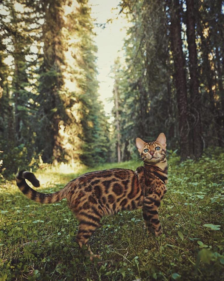 Conheça Suki... a Gatinha Que Adora Viajar Pela Montanha! 26