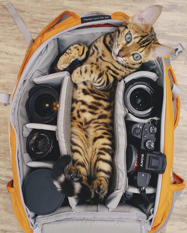Conheça Suki... a Gatinha Que Adora Viajar Pela Montanha! 5