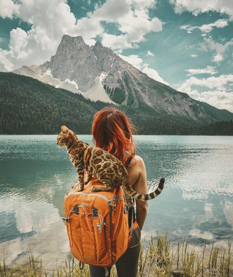 Conheça Suki... a Gatinha Que Adora Viajar Pela Montanha! 6